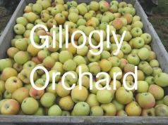 Gillogly-Orchard